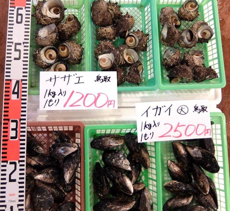 2017年6月23日(金)岩がき、サザエ、イガイ、人気の貝類勢揃い