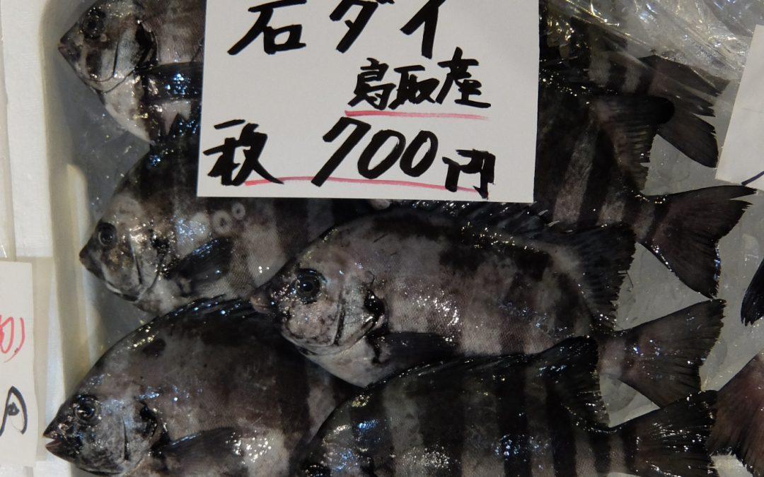 8/4(金)旬の牡蠣、白イカお見逃しなく!石ダイ、鮮魚セットも登場。