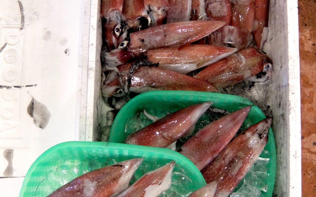 9/1(金)売り場開催:ハマチ、白イカなど。時化に負けずに海の幸をお届け!