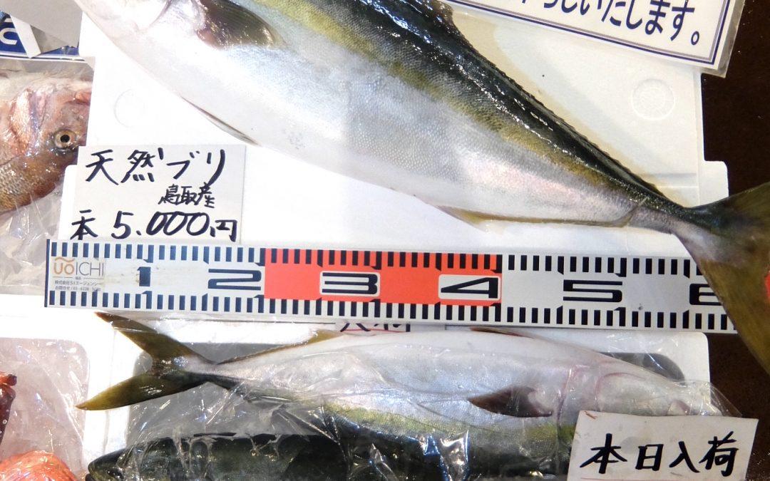 9/22(金)「ぶり」「ハマチ」「赤イカ」など、9月の旬が勢揃い!