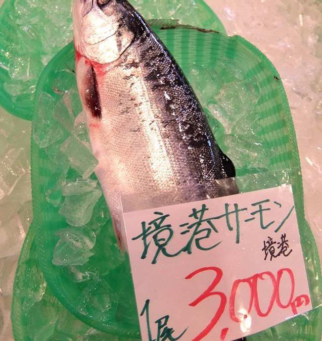 本日3/30(金)鳥取港海鮮市場かろいち:「境港サーモン」「ボイルタコ」を販売