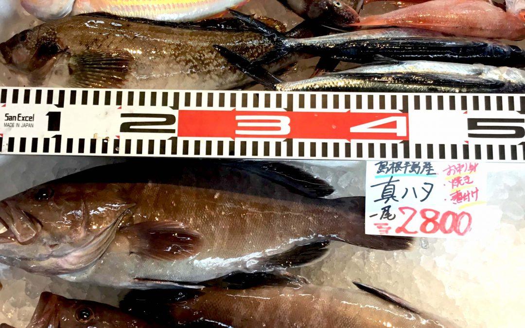 5/17(木)島根松江 海の幸 魚心: 鮮魚セット 、真ハタなどを販売