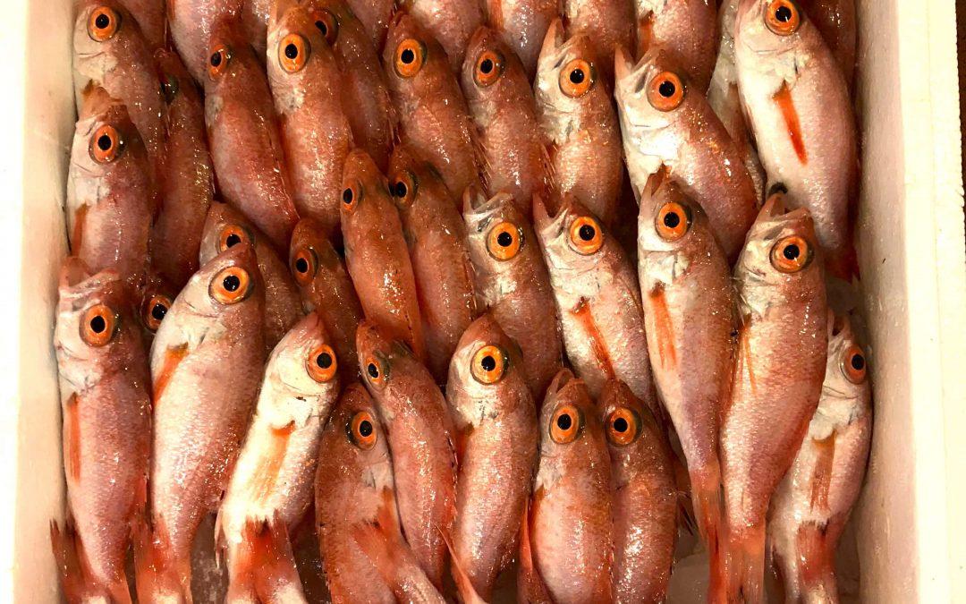5/21(月)鳥取賀露港海鮮市場 かろいち:のどぐろ(小)70尾セットや1.8kgの活〆アコウなど