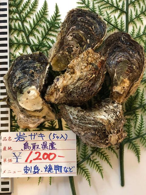 6/15(金)鳥取賀露港海鮮市場かろいち:天然岩がき、カマスなどが登場