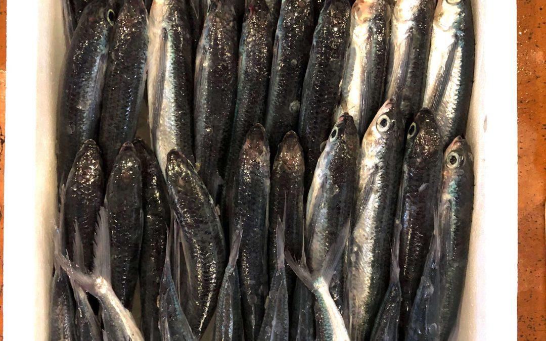 6/25(月) 鳥取賀露港海鮮市場 かろいち:天然岩がき「夏輝」、丸アゴなど