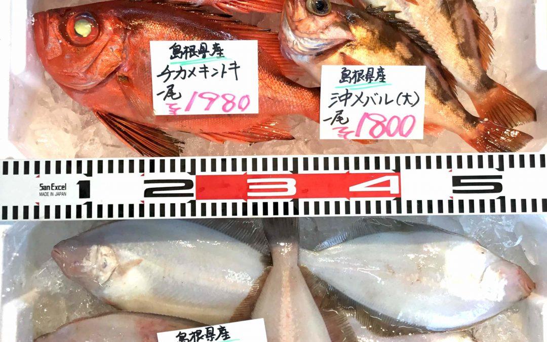 9/25(火) 島根松江 海の幸 魚心売り場:チカメキントキ、沖メバルなどを販売