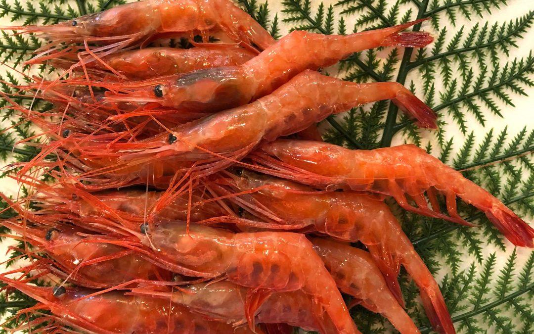 10/26(金) 鳥取賀露港海鮮市場かろいち:白イカ、甘エビなどを販売