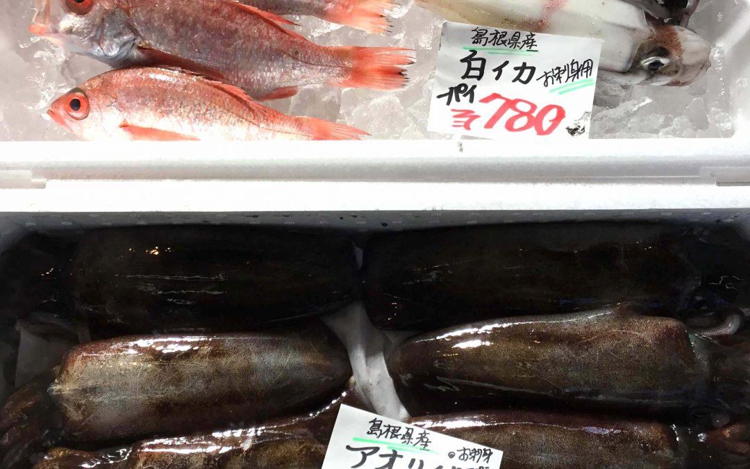 10/25(木) 島根松江 海の幸 魚心:白イカ、のどぐろなどが登場!