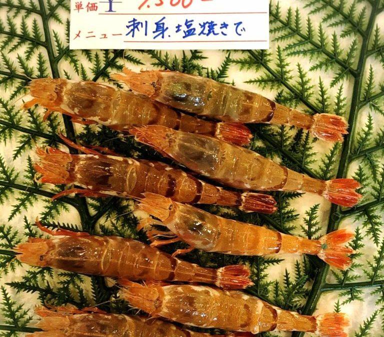 1/18(金) 鳥取賀露港海鮮市場 かろいち:モサエビ、ハタハタなどを販売