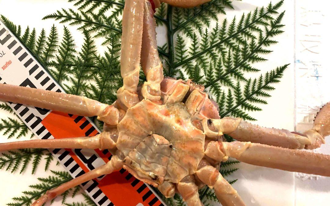 3/4(月) 鳥取賀露港海鮮市場 かろいち:活松葉ガニ、サザエなどを販売