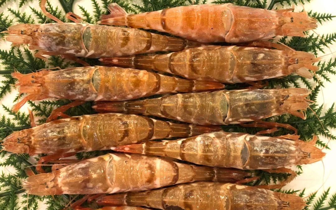 3/11(月) 鳥取賀露港海鮮市場 かろいち:モサエビ、白ハタなどを販売