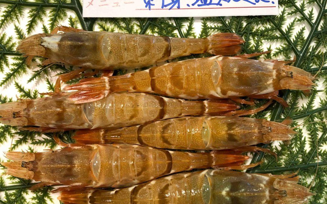 3/18(月) 鳥取賀露港海鮮市場 かろいち:モサエビ、生ホタルイカなど