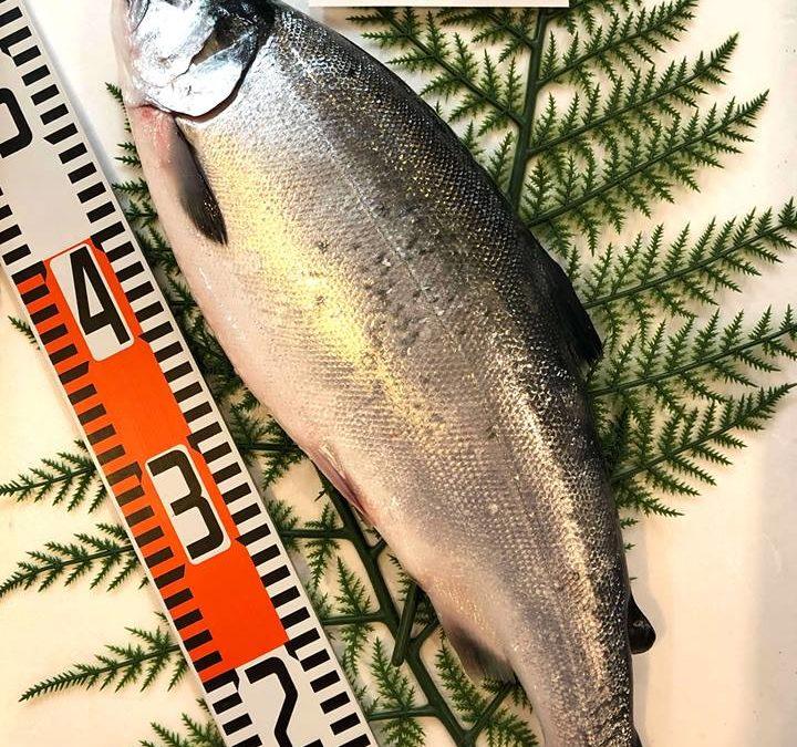 3/29(金) 鳥取港海鮮市場 かろいち:境港サーモン、白ハタなどを販売