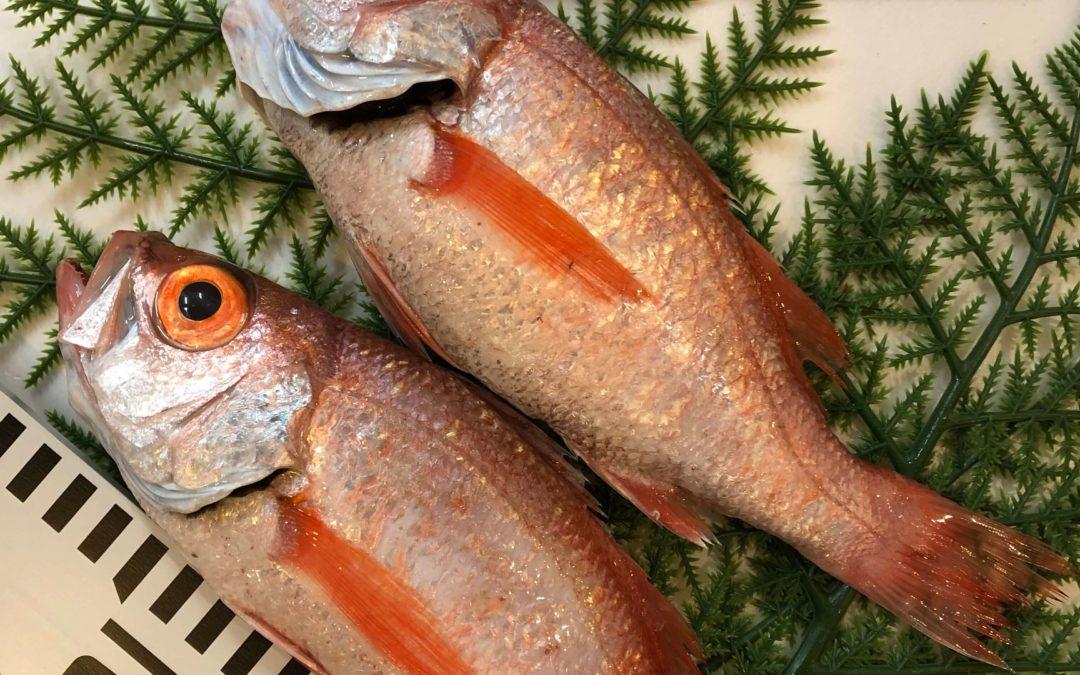 4/8(月) 鳥取港海鮮市場 かろいち:境港サーモン、のどぐろなどを販売