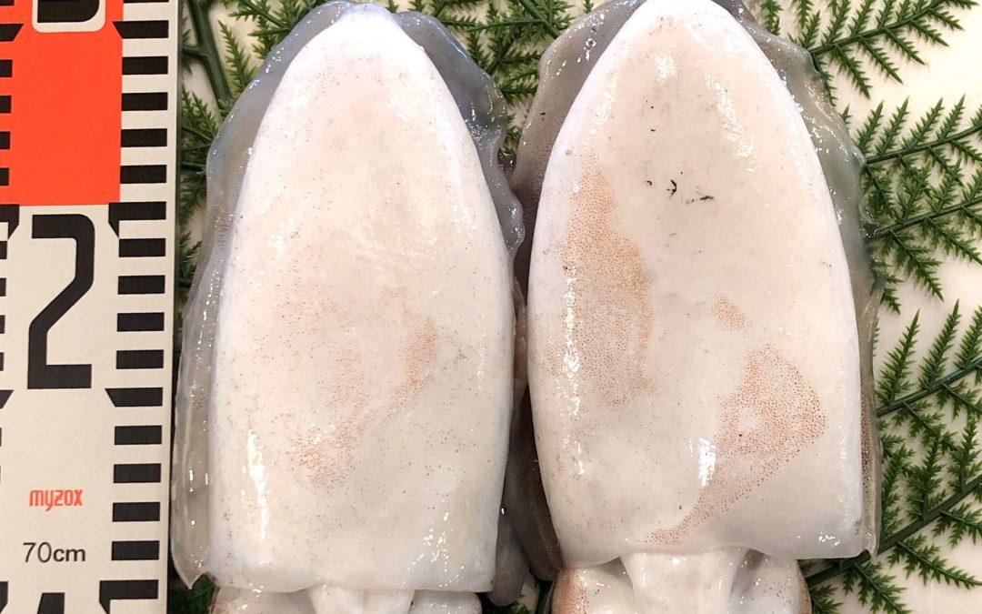 4/12(金)鳥取港海鮮市場 かろいち:境港サーモン、甲イカなどを販売
