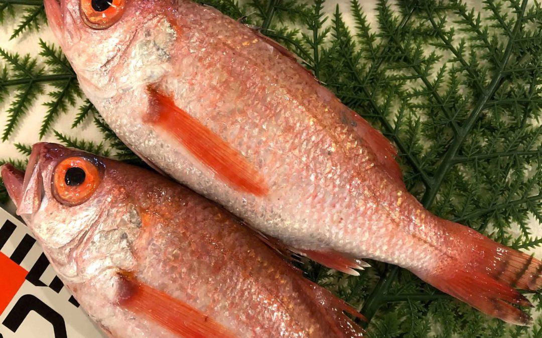 4/15(月) 鳥取港海鮮市場 かろいち:のどぐろやモサエビなどが売り場に登場