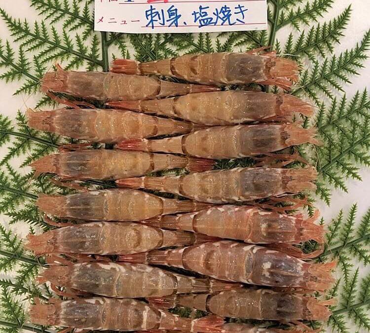 4/19(金) 鳥取港海鮮市場 かろいち:モサエビ、サザエなどを販売