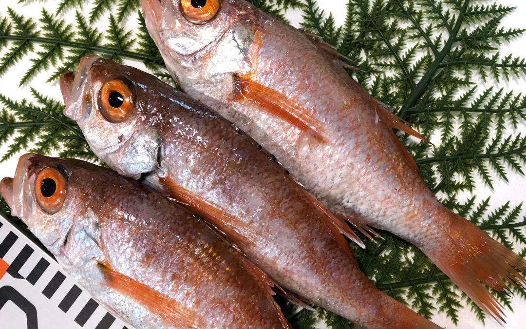 4/26(金)鳥取港海鮮市場 かろいち:のどぐろ、モサエビなどをお届け