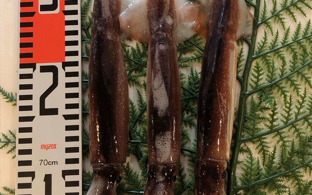5/10(金) 鳥取港海鮮市場 かろいち:のどぐろ、スルメイカなどを販売