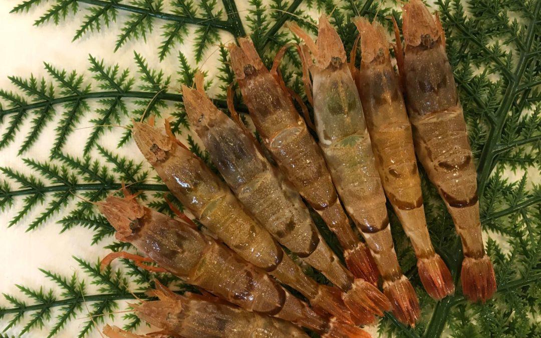 5/20(月) 鳥取港海鮮市場 かろいち:モサエビやイガイなどを販売