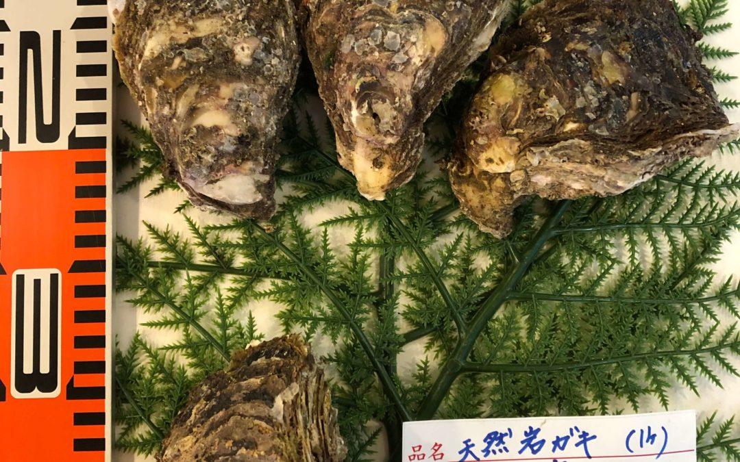 6/3(月) 鳥取港海鮮市場 かろいち:岩牡蠣や白イカを販売