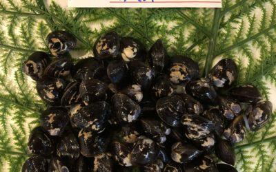 6/10(月)鳥取港海鮮市場 かろいち」:白イカやしじみなどを販売