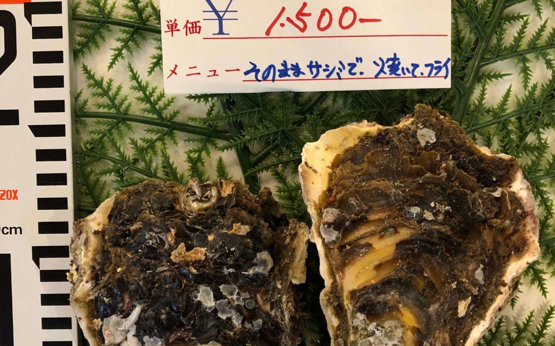 6/24(月) 鳥取港海鮮市場 かろいち:天然岩牡蠣「夏輝」、サゴシなどを販売