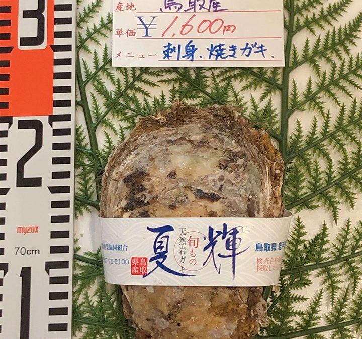 7月12日(金)鳥取港海鮮市場 かろいち:今が旬の天然岩牡蠣「夏輝」を販売