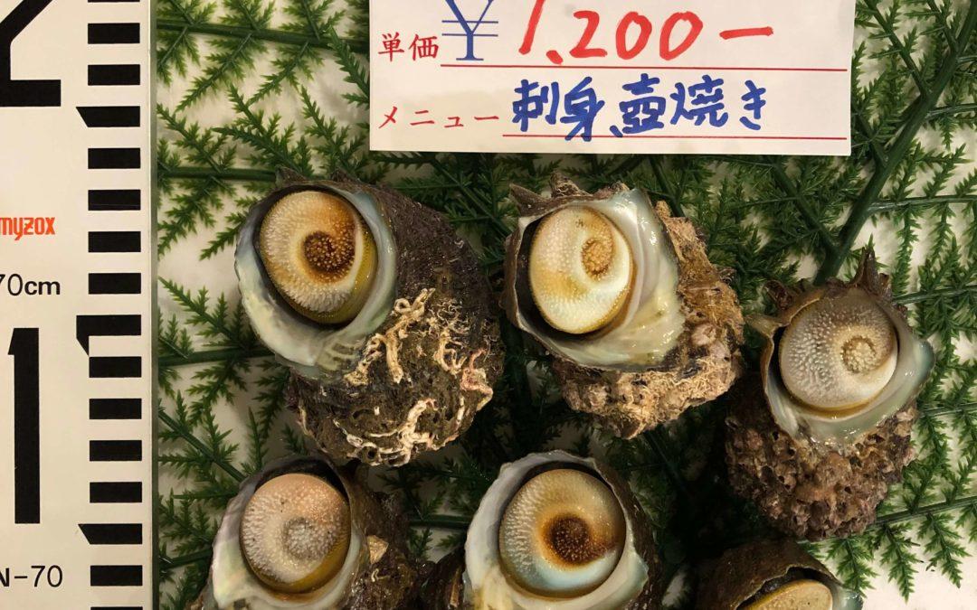 8月23日(金)鳥取港海鮮市場 かろいち:白イカ、サザエを販売