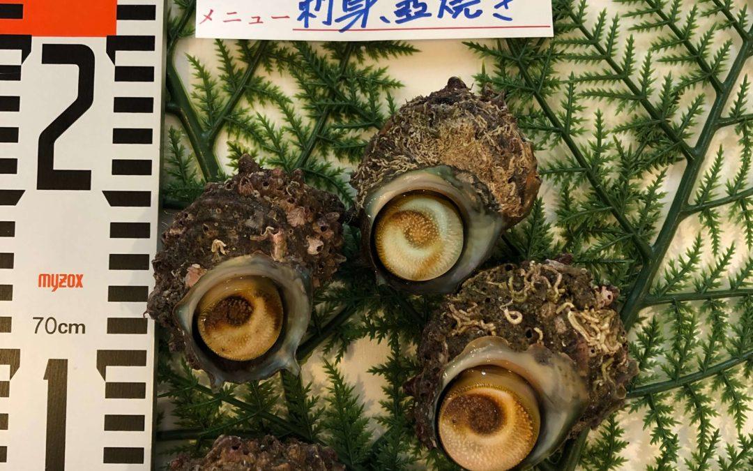 9月6日(金)鳥取港海鮮市場 かろいち:サザエ、スルメイカなどが登場