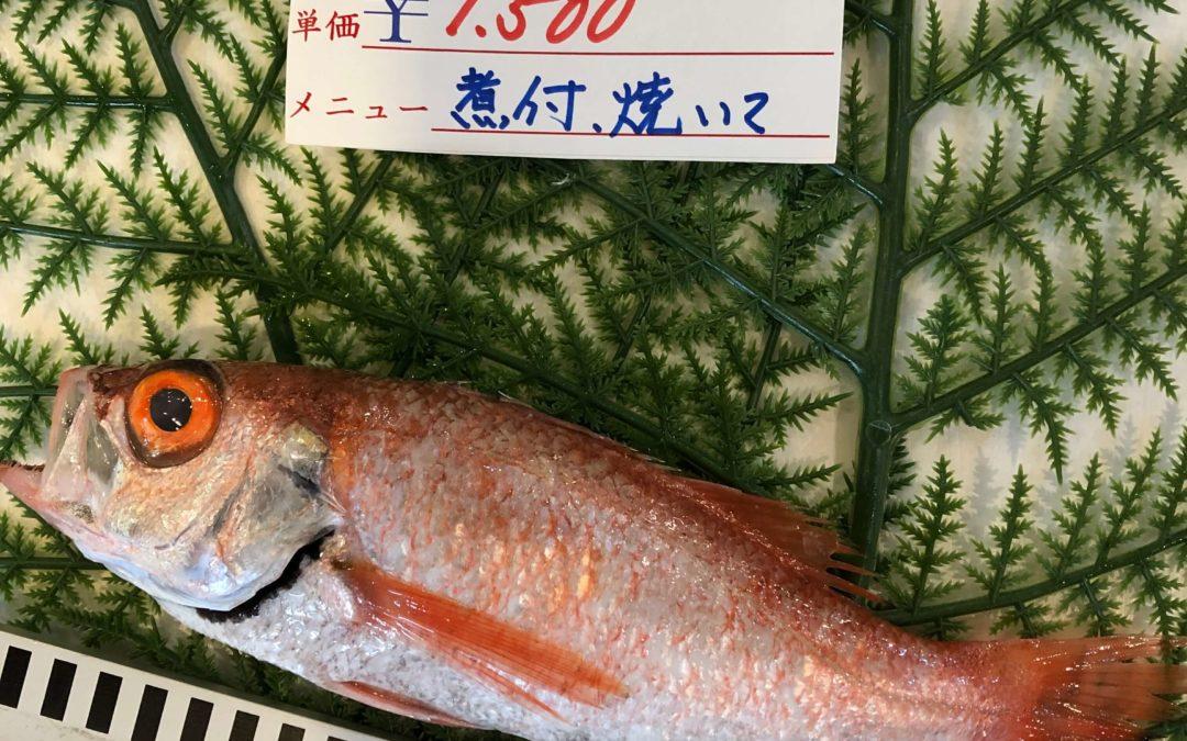 10月18日(金)鳥取港海鮮市場 かろいち:のどぐろやモサエビなど人気商品が登場