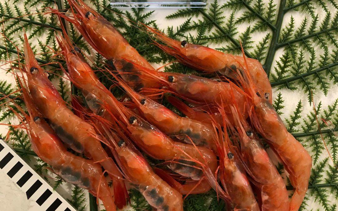10月25日(金)鳥取港海鮮市場 かろいち:のどぐろ、甘エビなど旬の鮮魚を販売