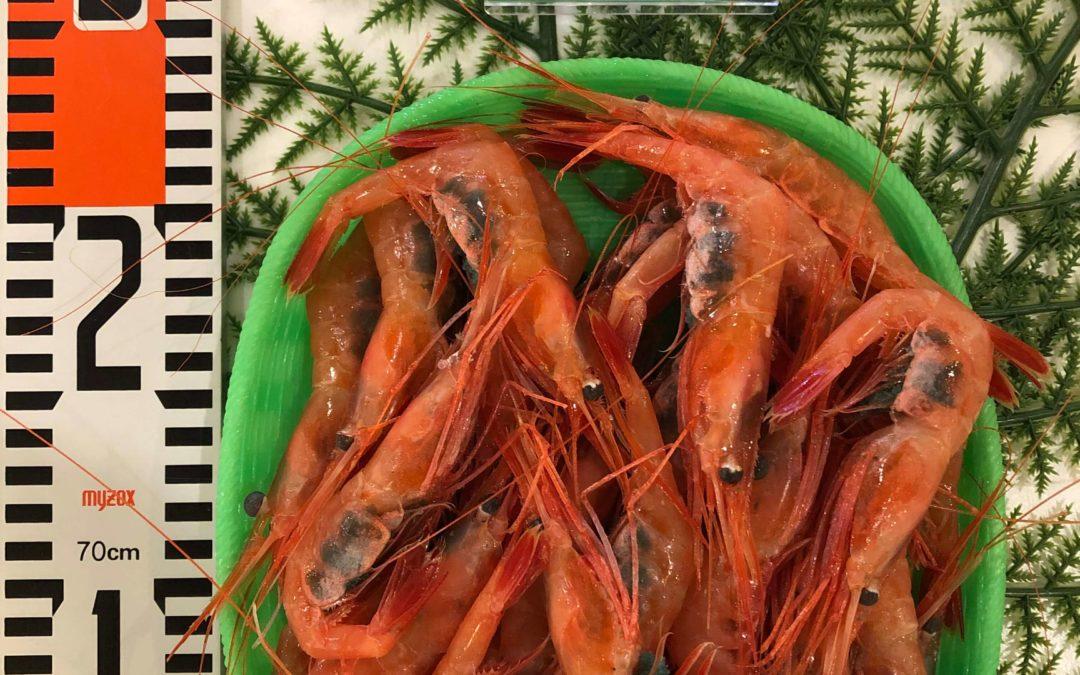 10月28日(月)鳥取港海鮮市場 かろいち:甘エビ、赤カレイなどを販売!