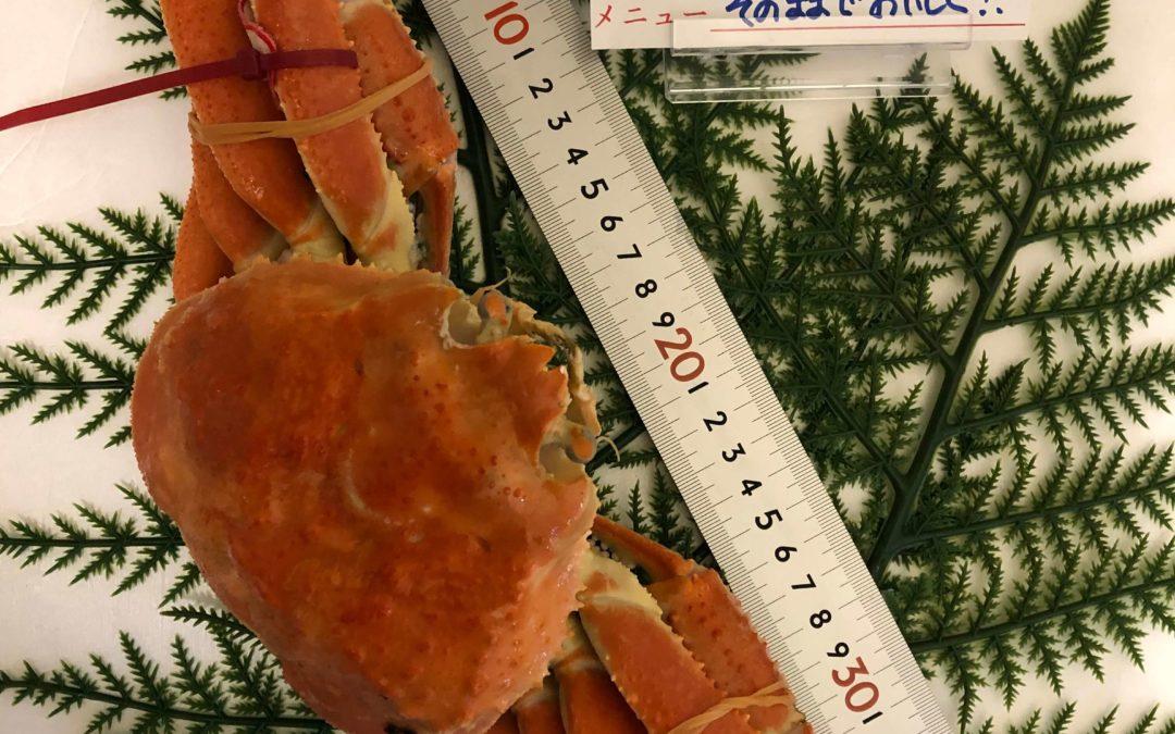 11月18日(月)鳥取港海鮮市場 かろいち:茹・松葉がに、のどぐろなどが登場!