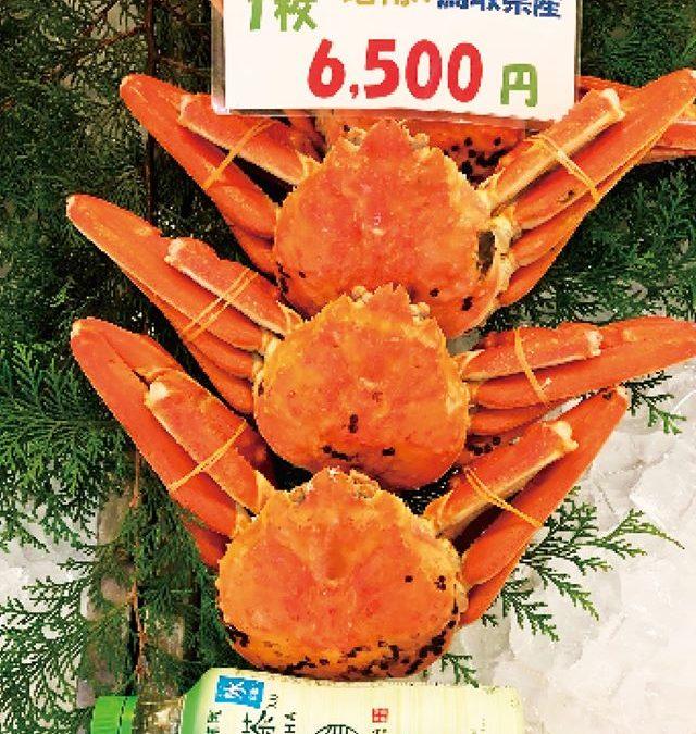 11月29日(金)鳥取港海鮮市場 かろいち:茹松葉がに、親がになどを販売