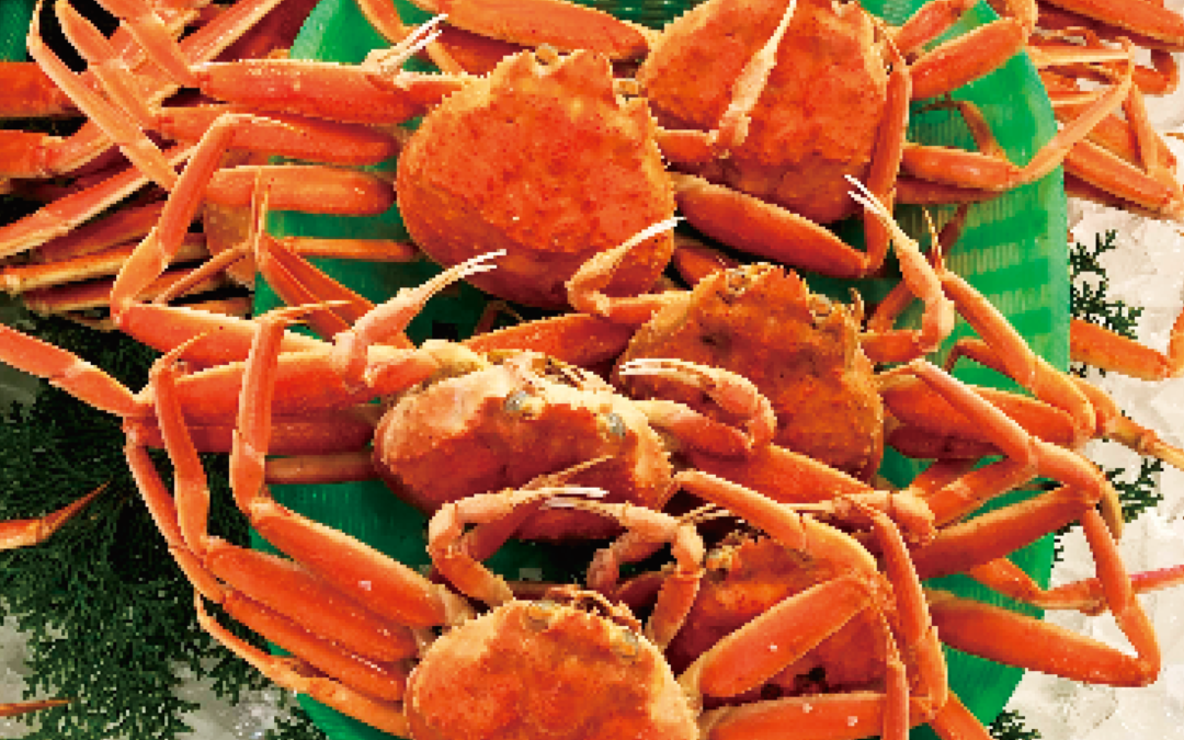 12月9日(月)鳥取港海鮮市場 かろいち:松葉がに、親がにを販売!