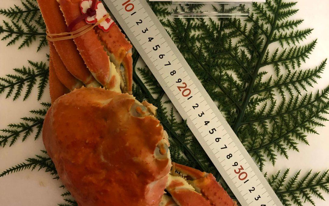 12月23日(月)鳥取港海鮮市場 かろいち:年内最後の開催!親がにラストチャンス!