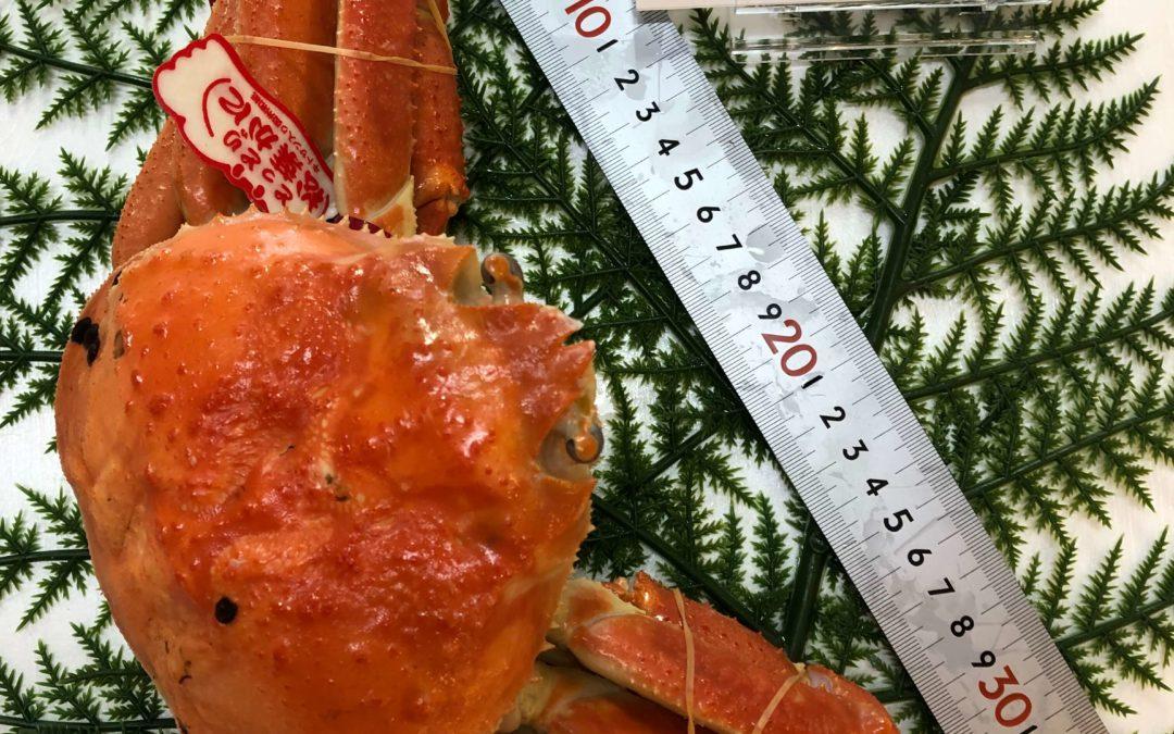 1月13日(月)鳥取港海鮮市場 かろいち:松葉がに、もさえびなど人気商品揃えました!