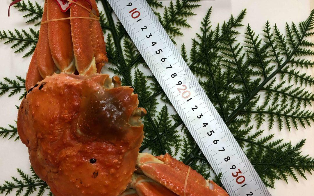 1月20日(月)鳥取港海鮮市場 かろいち:茹松葉がに、活モサエビなどを販売!