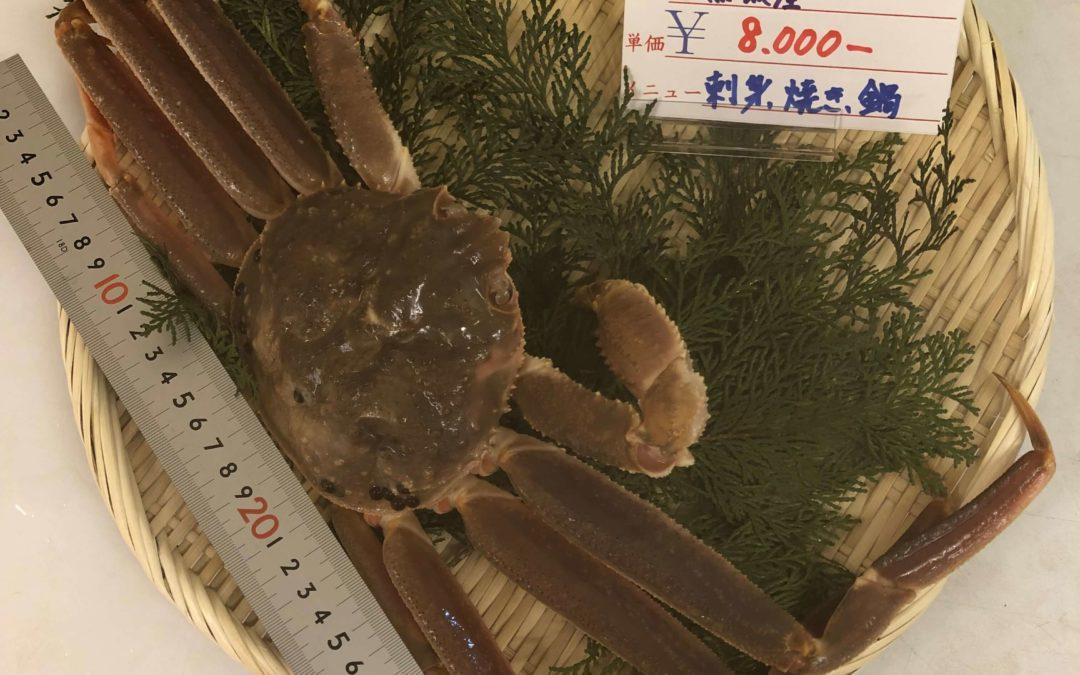 1月31日(金)鳥取港海鮮市場 かろいち:1月ラストの開催は松葉がに祭り!