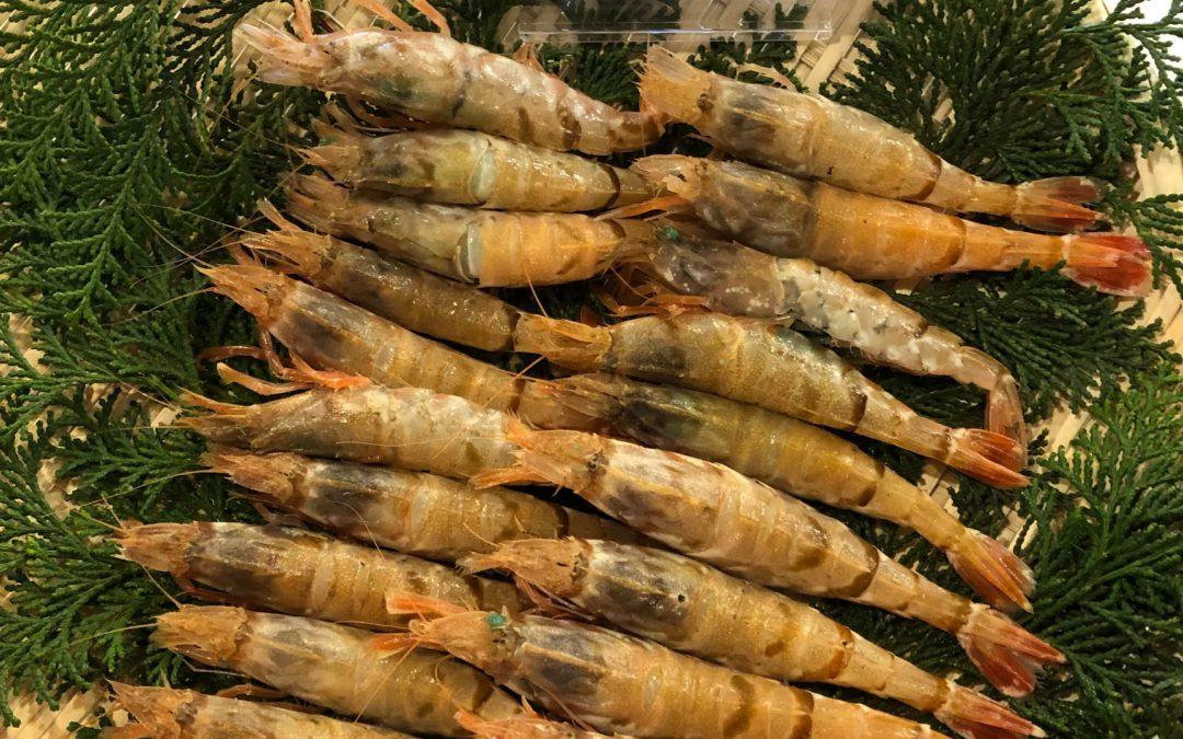 2月3日(月)鳥取港海鮮市場 かろいち:活モサエビ、サザエなどを販売!