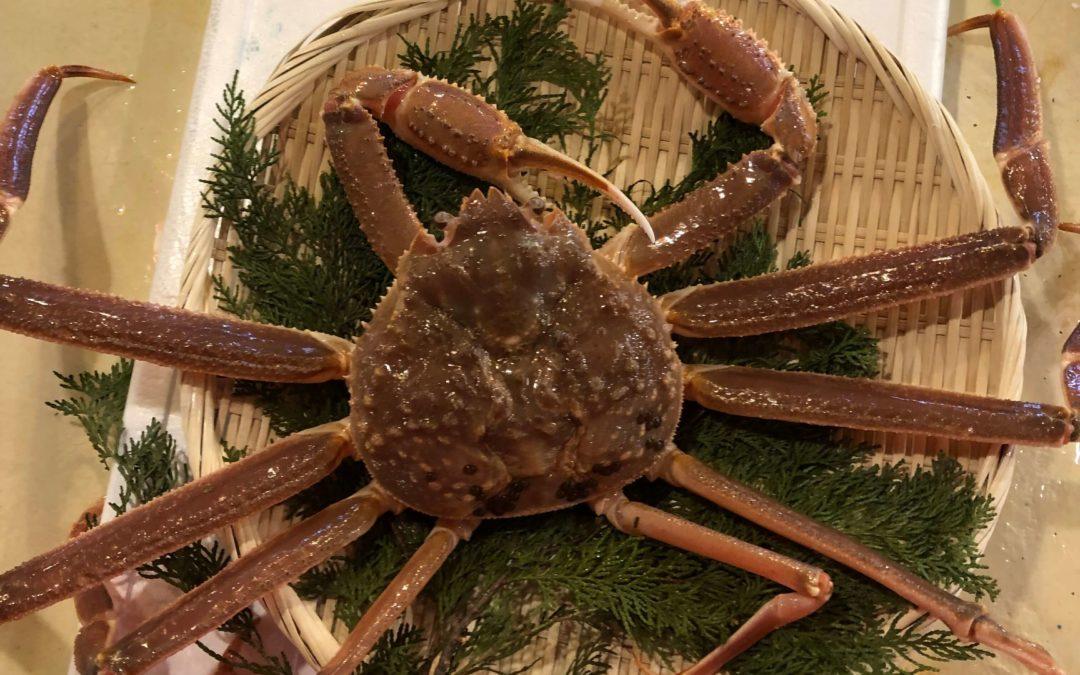 2月17日(月)鳥取港海鮮市場 かろいち:今が旬の「若松葉がに」が登場!
