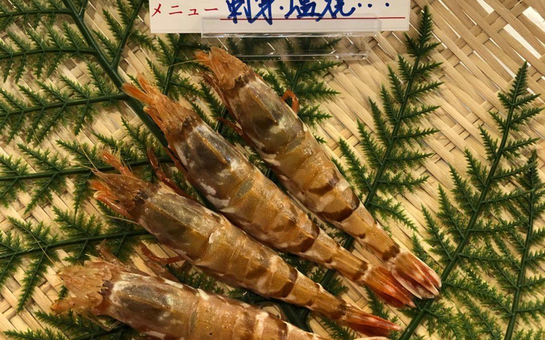 3月23日(月)鳥取港海鮮市場 かろいち:新鮮で美味しいサザエ、モサエビが登場!