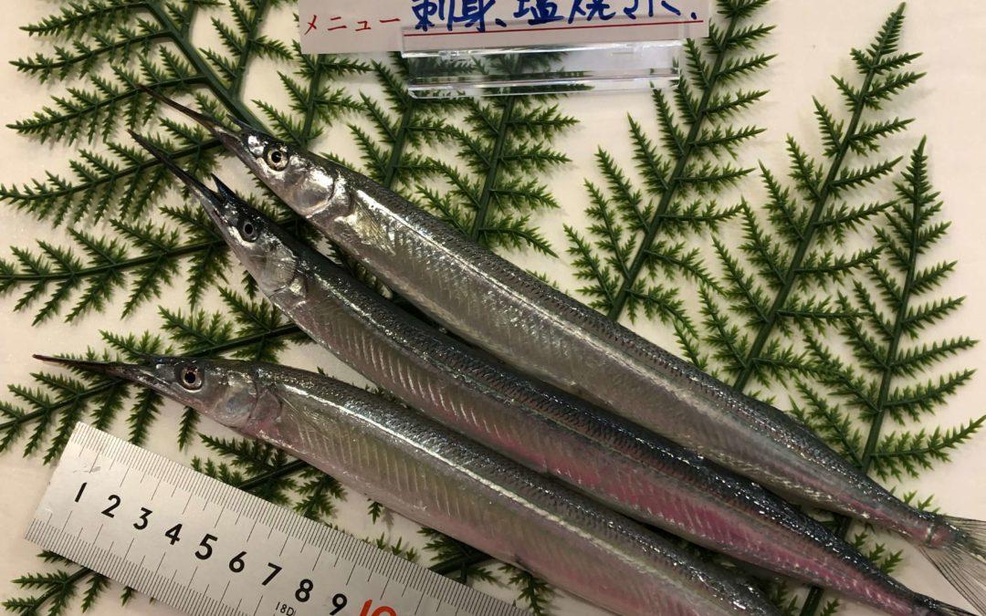 3月27日(金)鳥取港海鮮市場 かろいち:サヨリやサザエなどを販売