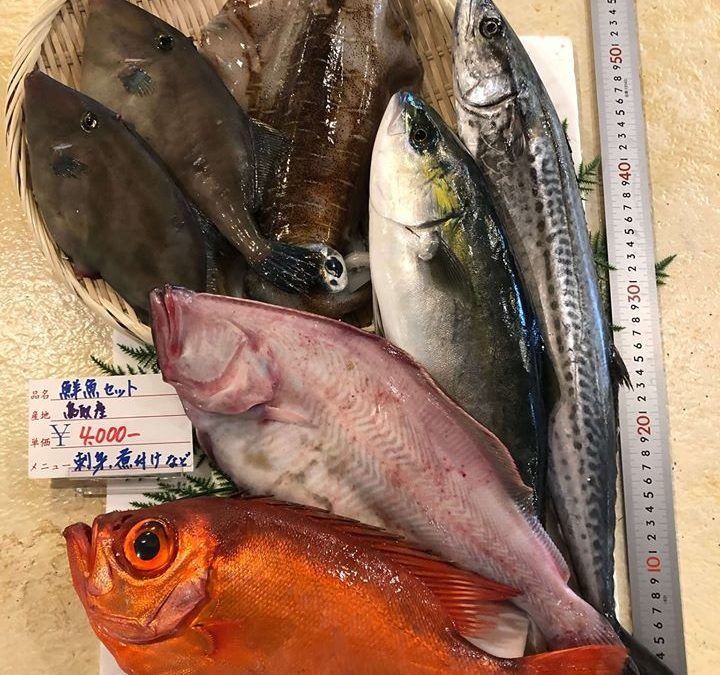5月11日(月)鳥取港海鮮市場 かろいち:お得な鮮魚セットを販売。2500円以上セット購入は送料無料!