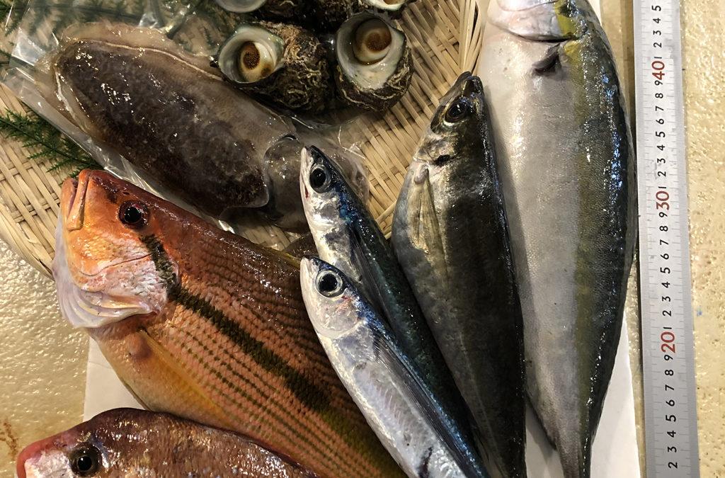 5月29日(金)鳥取港海鮮市場 かろいち:2500円以上で送料サービス!旬の鮮魚セットご用意してます。