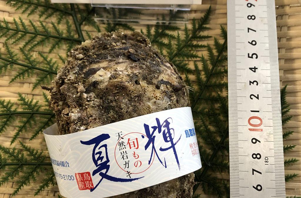 6月5日(金)鳥取港海鮮市場 かろいち:2500円以上で送料無料!鳥取自慢のブランド牡蠣「夏輝」登場。