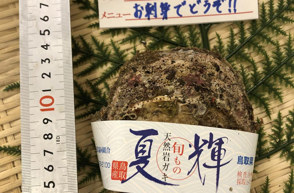 6月12日(金)鳥取港海鮮市場 かろいち:鮮魚セット、岩ガキを販売。2500円以上で送料無料!
