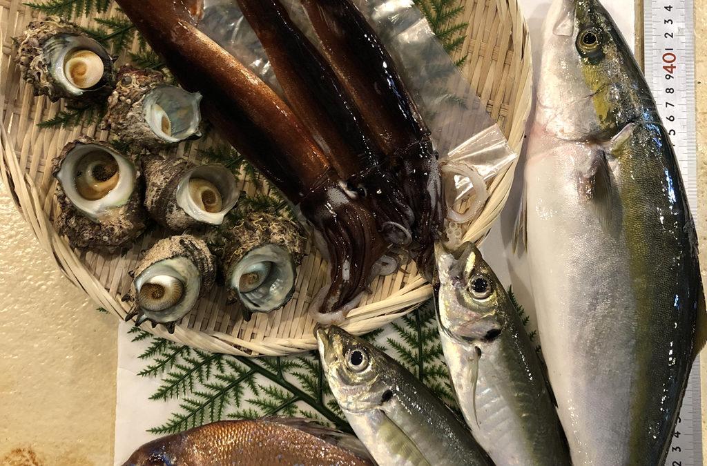 6月22日(月)鳥取港海鮮市場 かろいち:お得な鮮魚セットが登場。2500円以上で送料無料!