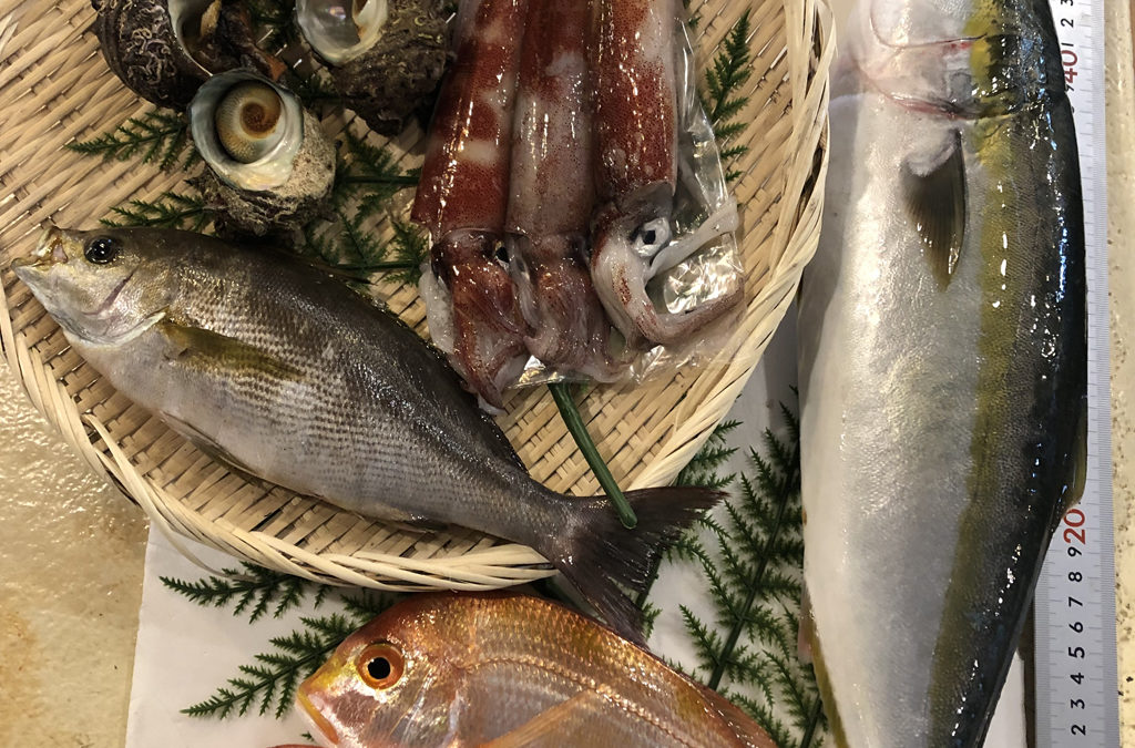 6月29日(月)鳥取港海鮮市場 かろいち:鮮魚セットや白イカを販売!